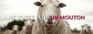slider_idee_mouton